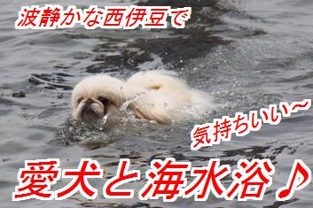umimiro1_20150731015458d65.jpg