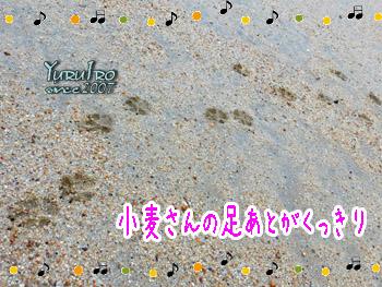 yuruiro20150818_k002