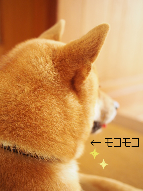 20150818-001.png