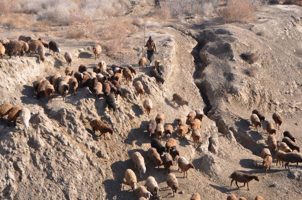 荒野の羊飼い