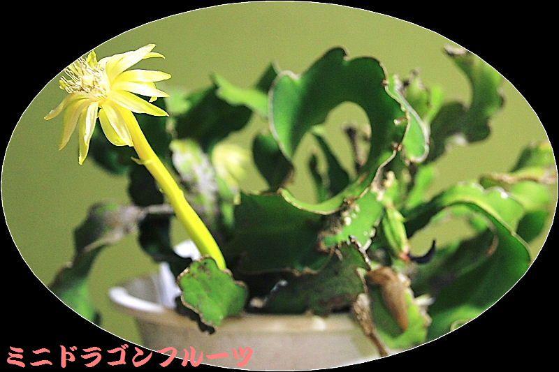IMG_0001_2015081909314666b.jpg