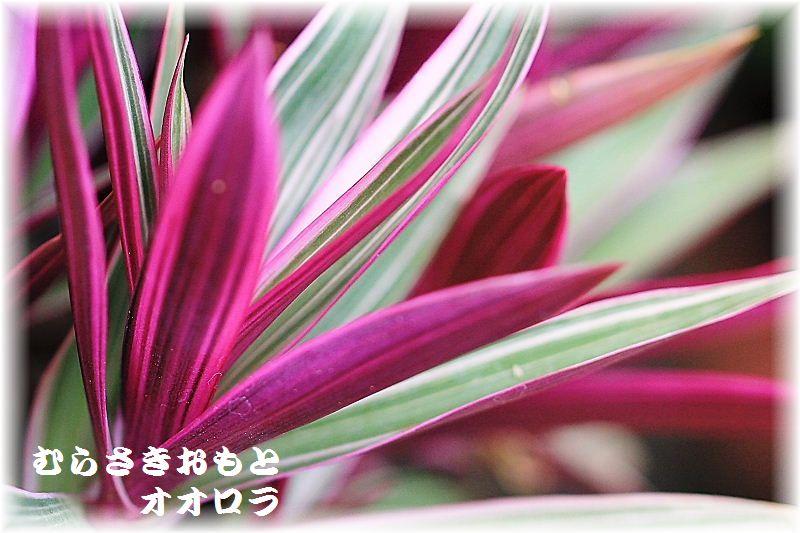 IMG_0011_201508162218041e5.jpg