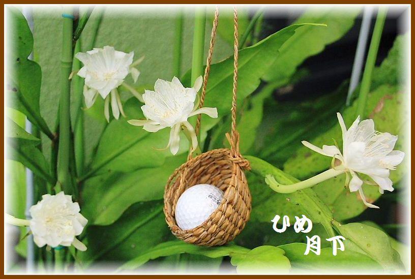 IMG_0018_201508201601262f9.jpg