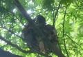 ヒヨドリの巣立ち-4