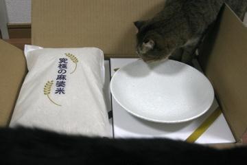 kotasuzu303.jpg