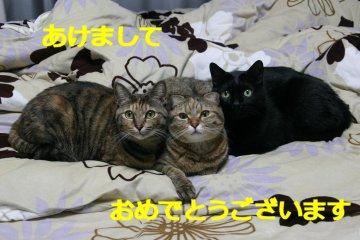 kotasuzumiyu50.jpg