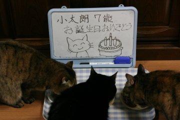 kotasuzumiyu51.jpg
