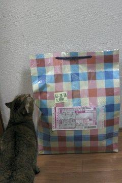 miyu88.jpg