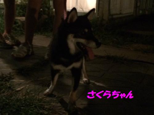 IMG_2648Blog.jpg