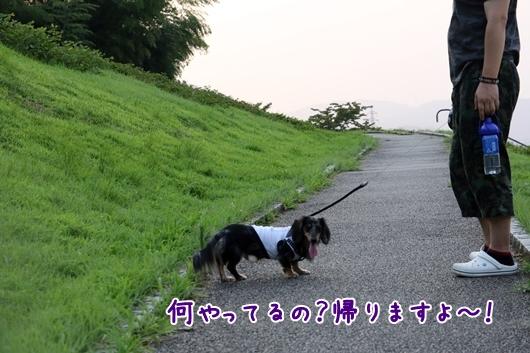3V9A3146.jpg