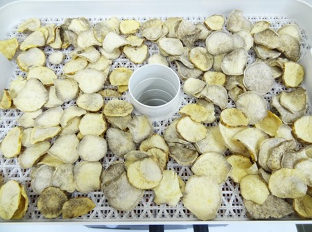 干し芋 24時間乾燥後