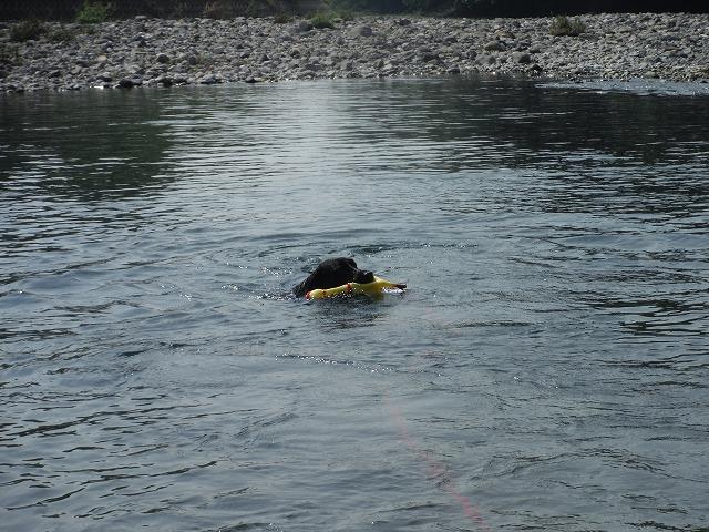 さっそく泳ぐマル