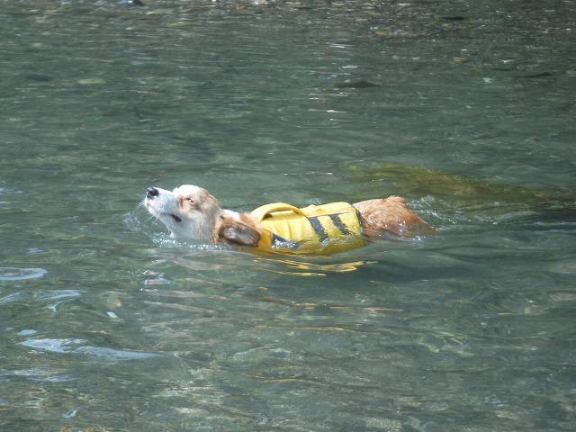ムギも泳ぐ