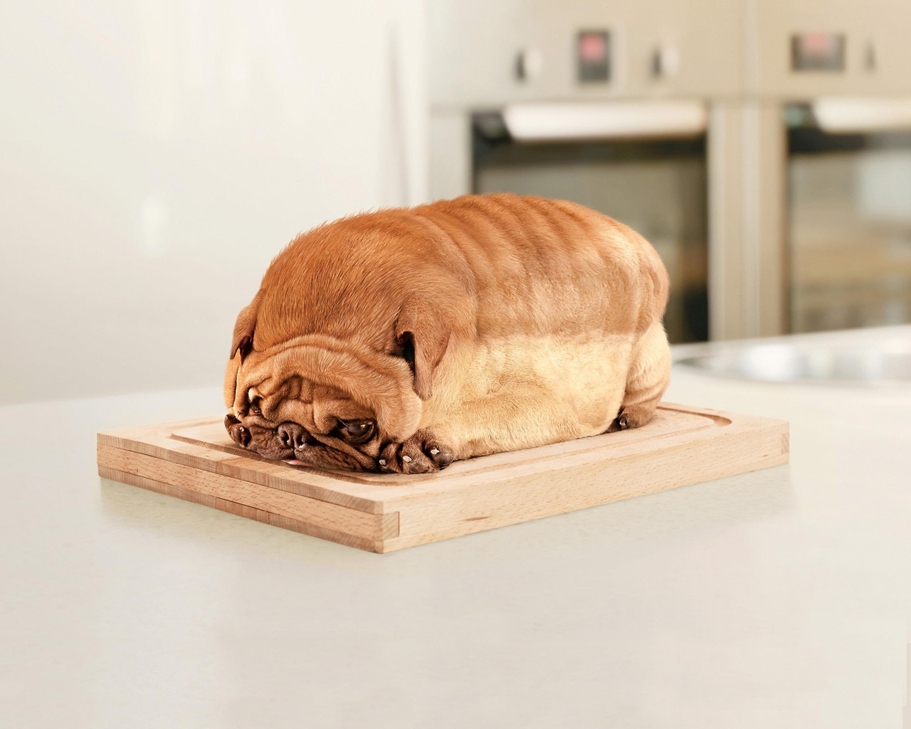 Funny_wallpapers_Dog_Bread_016838_.jpg