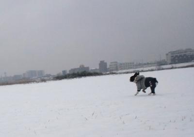 snow20155.jpg