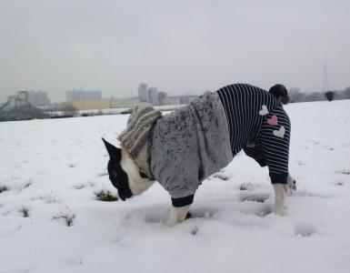 snow20156.jpg
