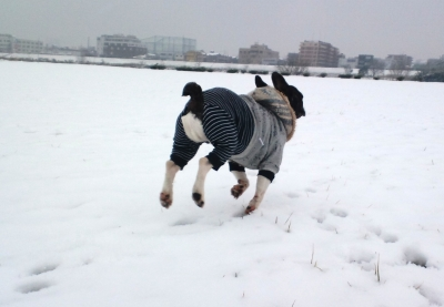 snow20157.jpg