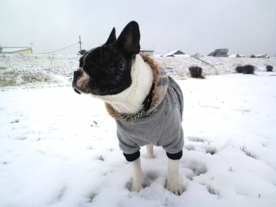 snow20159.jpg