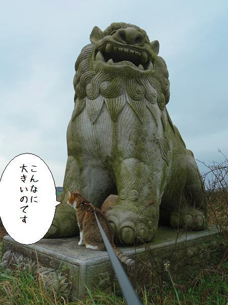 狛犬さん5