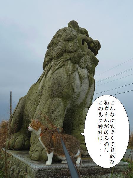 狛犬さん6