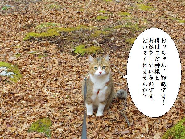 囲碁神社11