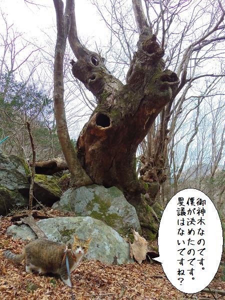 囲碁神社14