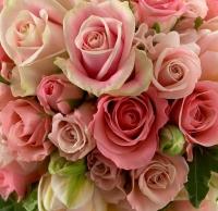 pinkimage_jpg_jpge.jpg