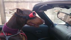 Brianna ドライブ