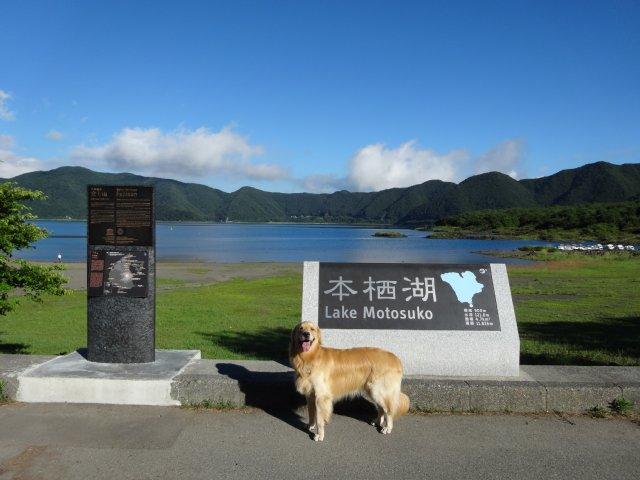 本栖湖 犬 2015-7-22 002