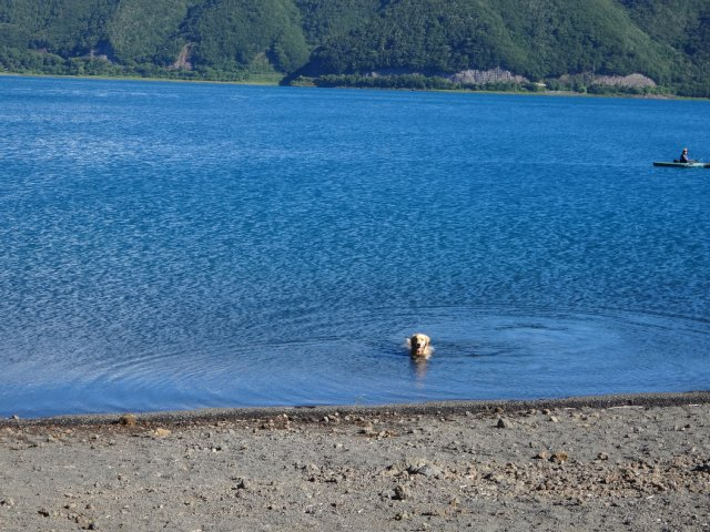 本栖湖 犬 2015-7-22 022