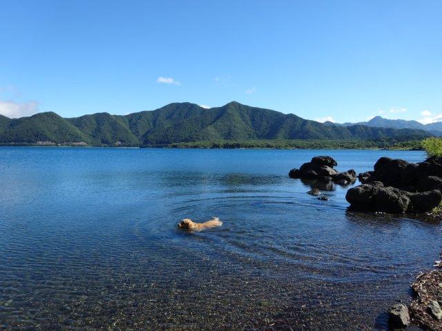 本栖湖 犬 2015-7-22 024