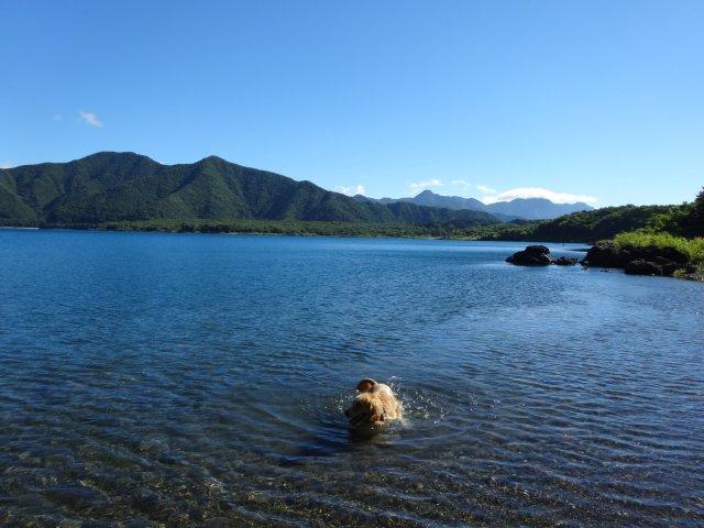 本栖湖 犬 2015-7-22 025