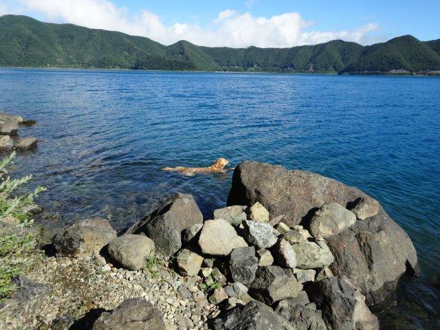 本栖湖 犬 2015-7-22 029