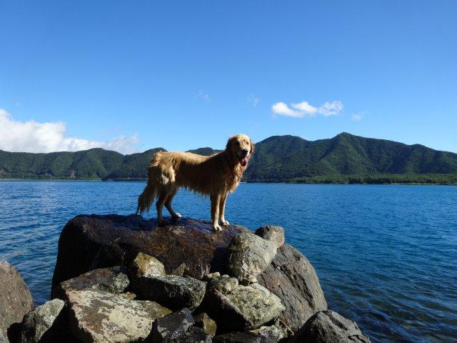 本栖湖 犬 2015-7-22 032
