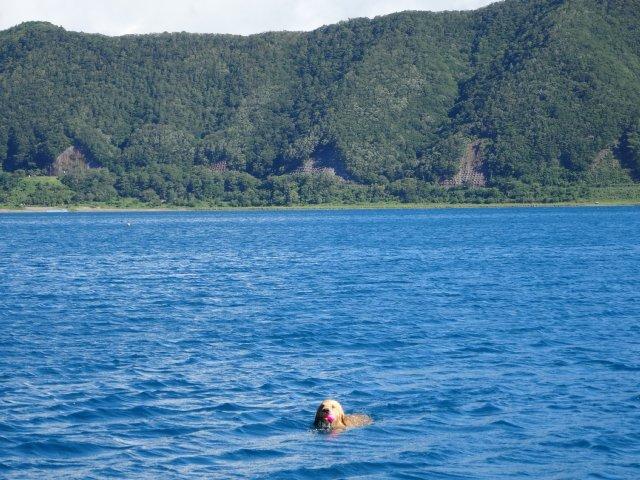本栖湖 犬 2015-7-22 036