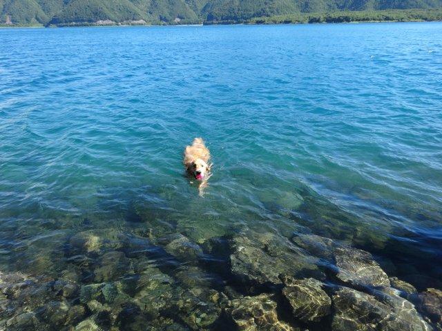 本栖湖 犬 2015-7-22 039