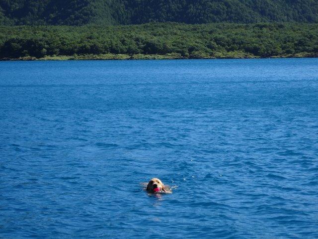 本栖湖 犬 2015-7-22 041