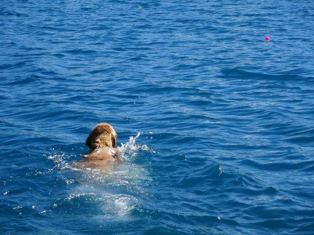 本栖湖 犬 2015-7-22 044