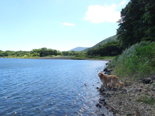 本栖湖 犬 2015-7-22 076