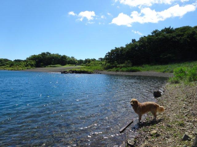 本栖湖 犬 2015-7-22 078