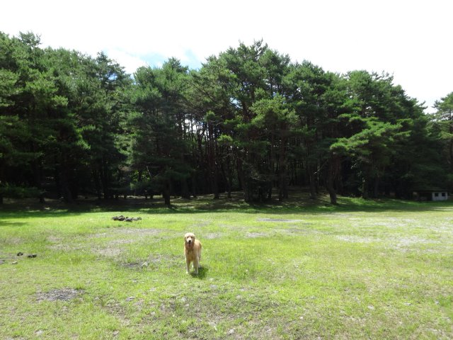 本栖湖 犬 2015-7-22 080