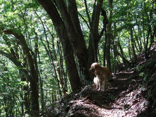 本栖湖 犬 2015-7-22 020