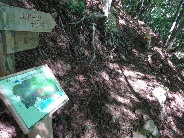 本栖湖 犬 2015-7-22 021