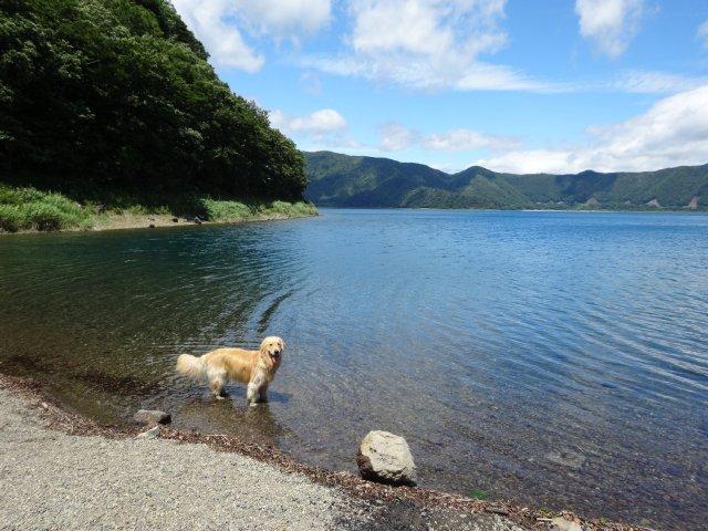本栖湖 犬 2015-7-22 083