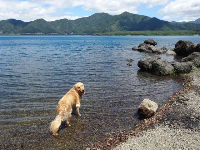 本栖湖 犬 2015-7-22 086