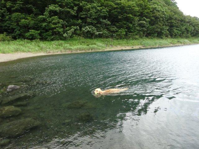 本栖湖 犬 2015-7-22 091