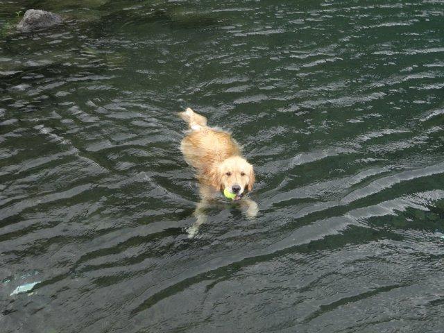 本栖湖 犬 2015-7-22 093