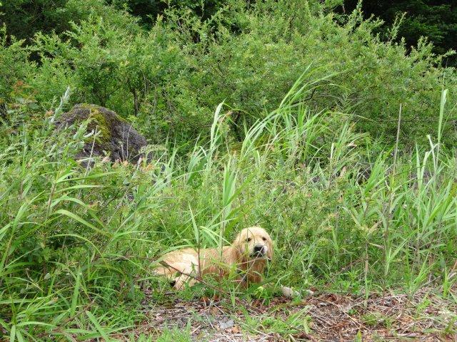 本栖湖 犬 2015-7-22 097