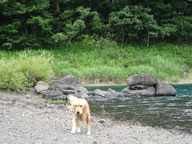 本栖湖 犬 2015-7-22 102