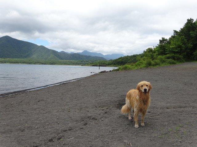 本栖湖 犬 2015-7-22 104